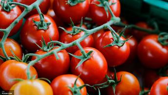 Эксперты: Россия может прожить без западных ГМО еще 100 лет