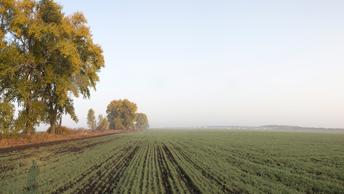 Страусы вместо свиней: Украинские власти успешно гробят сельское хозяйство