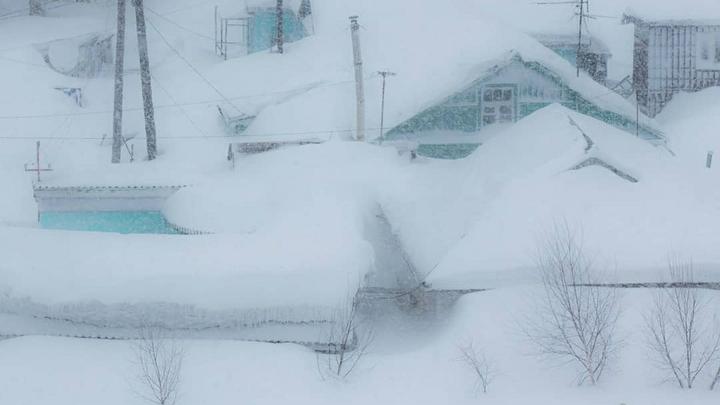Небывалый разгул стихии в США: Стадо коров на ранчо в Южной Дакоте завалило снегом, животных откапывают - соцсети