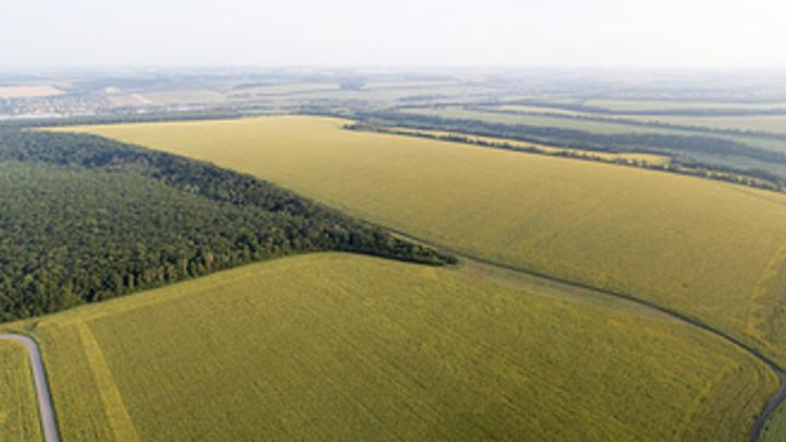 Инопланетные послания в виде кругов на полях обнаружили жители Бердска