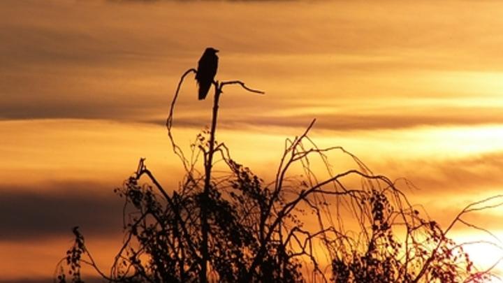 Сердобольные нижегородцы все чаще «спасают» птенцов-слетков из природы