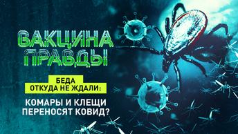 Беда откуда не ждали: комары и клещи переносят ковид?