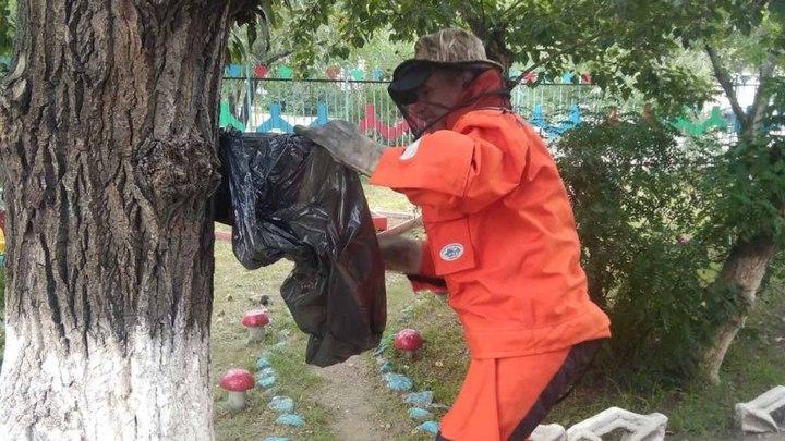 Это жжж не спроста! Читинские спасатели убрали осиное гнездо с территории детсада