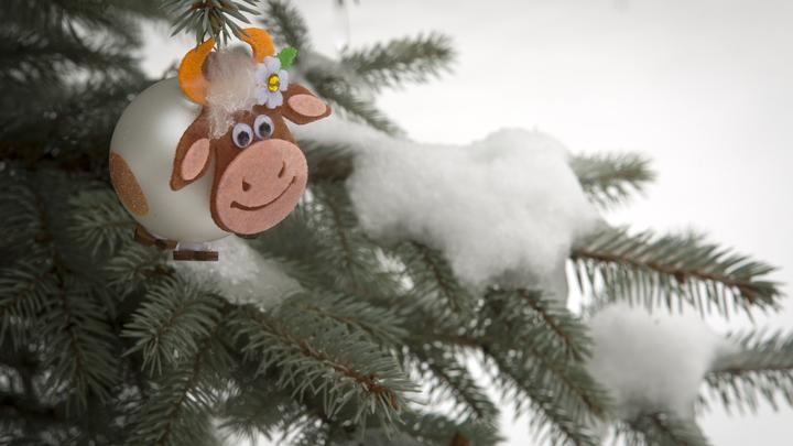 Власти Новосибирска отказались от массовых праздничных мероприятий в Новый год