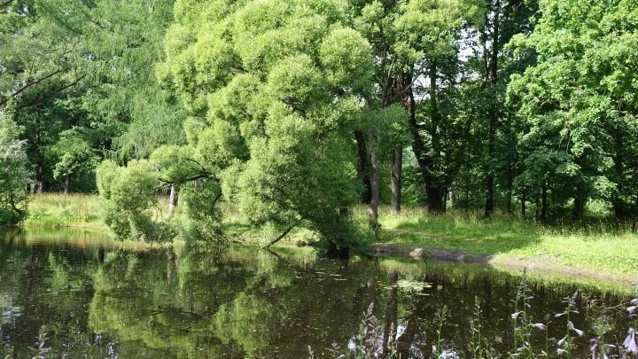 В Новокузнецке нашли тело утонувшего в озере мужчины