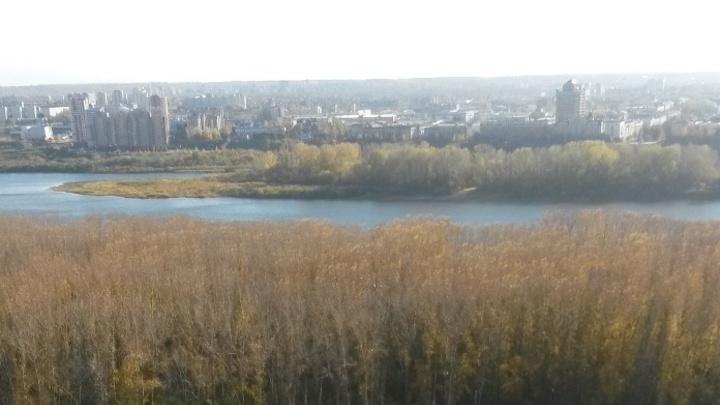 Глава Кемерова рассказал о сроках обработки парков от клещей