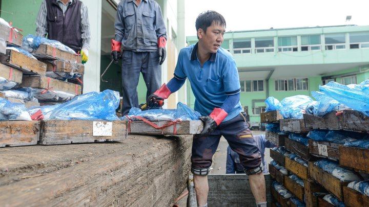 Южную Корею снова атаковал вирус птичьего гриппа