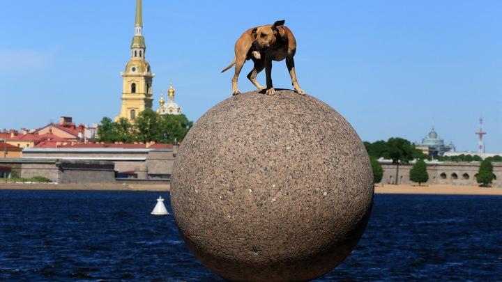Болезнь отступила, но не ушла: Эксперты Минздрава оценили, как Петербург борется с COVID