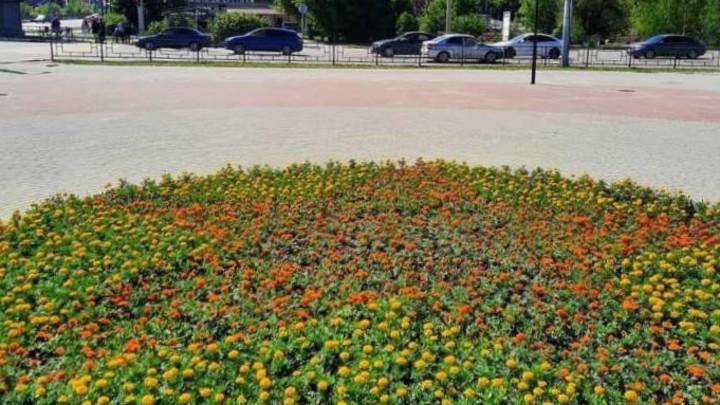 В Иванове меняют тюльпаны на бархатцы и петунии