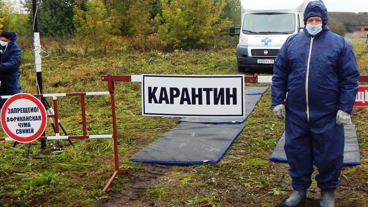 В Ивановской области введен карантин по оспе овец и чуме свиней