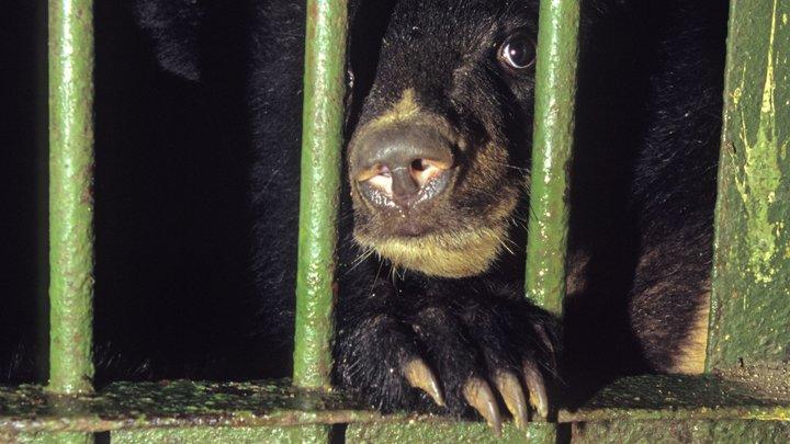 Даже суровые сибиряки не сдержались при виде плачущего медвежонка