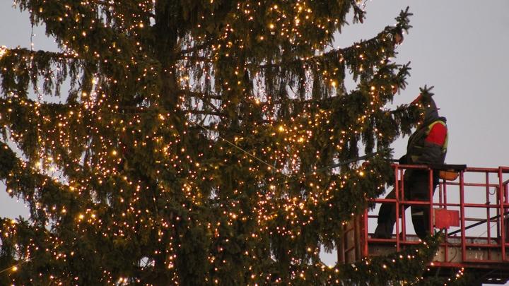 Все-таки распушилась: главную новогоднюю елку Санкт-Петербурга включат этим вечером