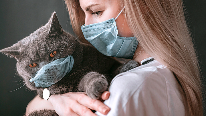 Пора убивать котиков. Британские учёные списали вакцины от COVID-19
