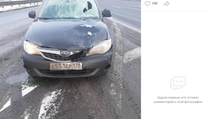 Видео: В Санкт-Петербурге на КАД сбили дорожного рабочего