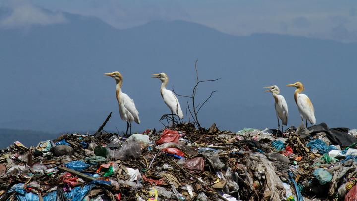 Атлантика покрылась пластиковой кожей. Учёные хватаются за голову