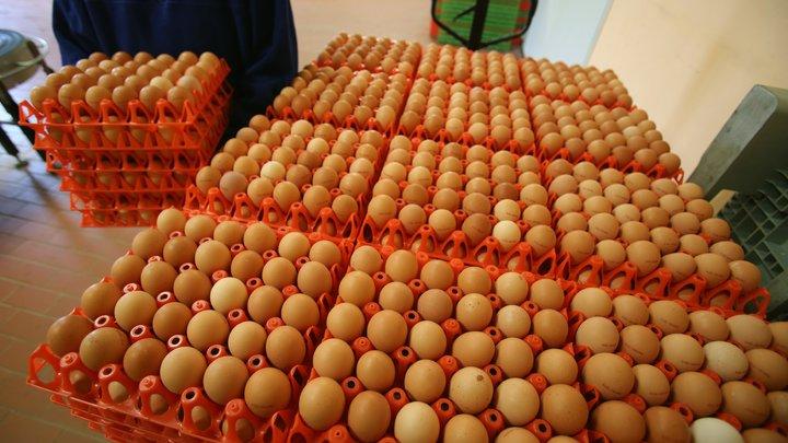 Обошли американцев: Аналитики подсчитали, сколько яиц съедают в России