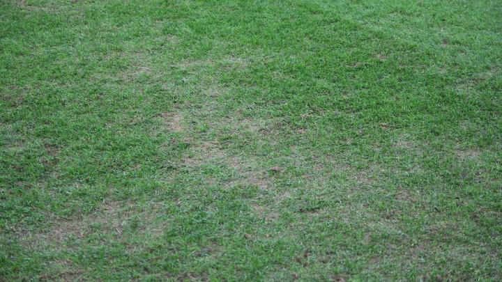 Тренировочные поля сборных Англии и Аргентины на ЧМ-2018 покрылись снежной плесенью