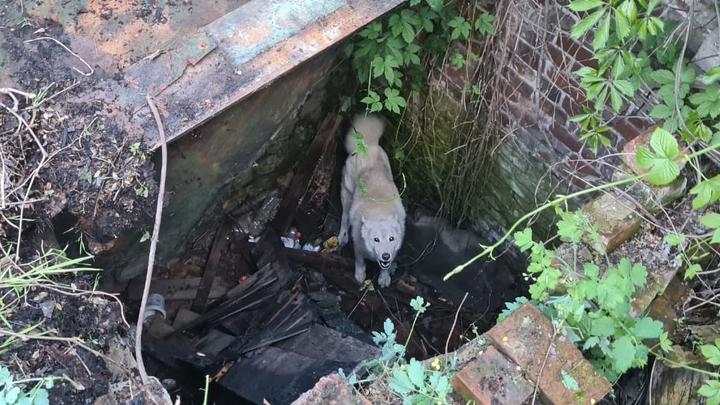 В Армавире собака просидела в старом колодце три дня