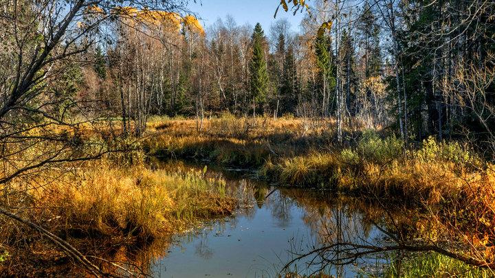 Россия катастрофически теряет леса