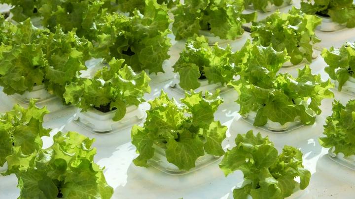 Не мучайте себя листьями салата: Врач объяснила, что не так с диетами из Интернета