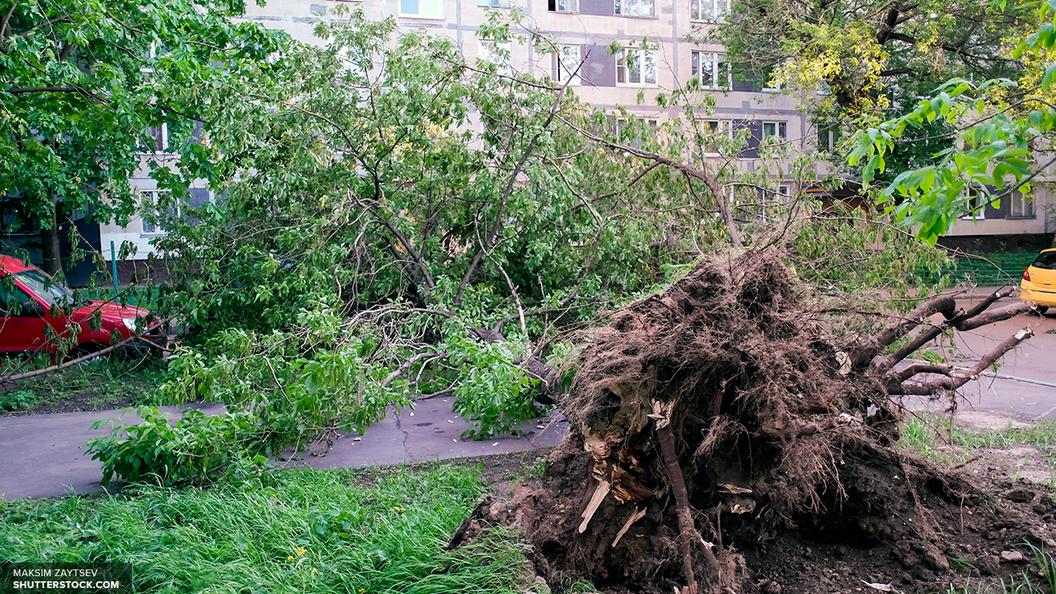 В столице России  объявлено штормовое предупреждение всвязи сдождем ипорывистым ветром