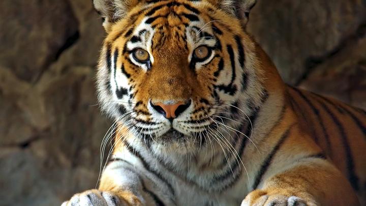 Музыкант Землян написал песню сыну тигра Амура