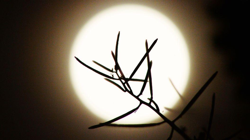 ВЛапландии засняли навидео «сияние тысячи лун»