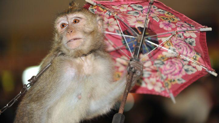 Поработай белой обезьянкой: Русских учителей заманили во Вьетнам, но там их ждал ад