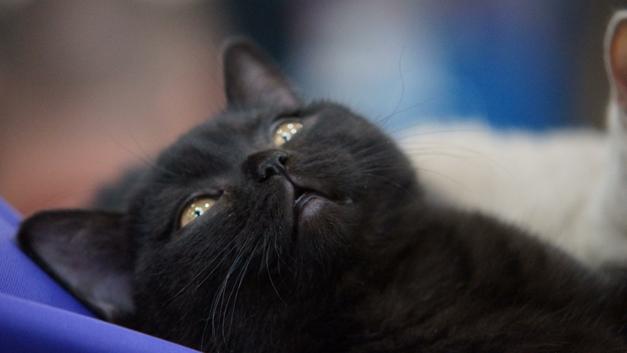 Метался от машины к машине: Полиция Приморья спасла выбежавшего на дорогу котенка - фото