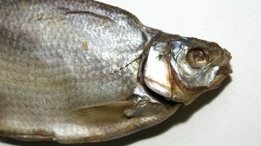 Жителя Америки посадили заубийство домашней рыбки