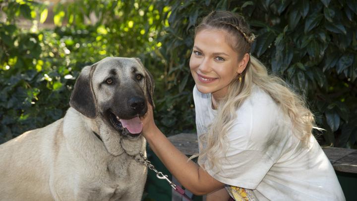 Собаки не чистый лист бумаги: Пять шагов, которые хозяин должен пройти с псом из приюта