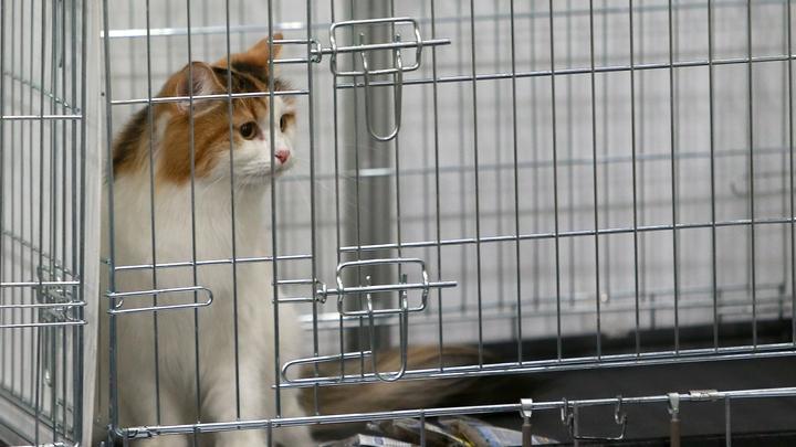 Ученый из США обвинил кошек и собак в глобальном потеплении