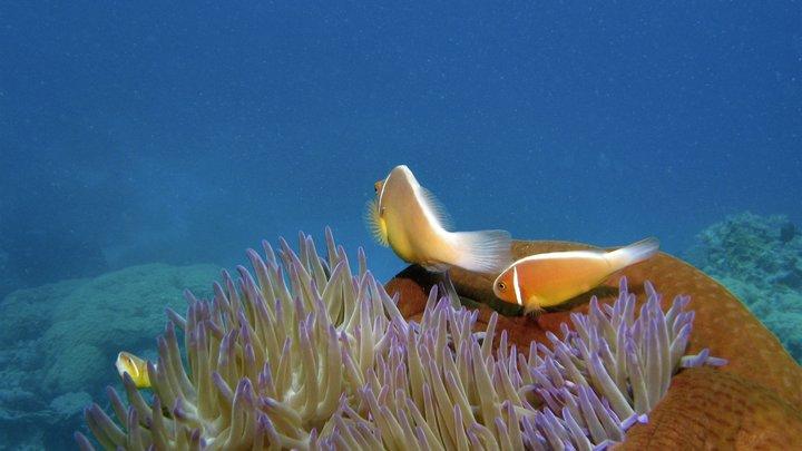В Тихом океане нашли гигантских глубоководных ксенофиофор. Эти существа строят сами себя
