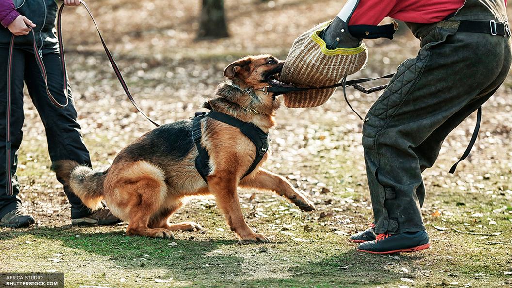 СМИ озвучили меры воздействия на опасных собак в России