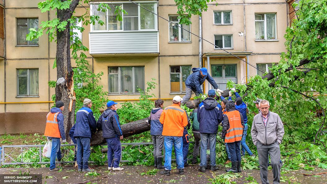 МЧС предупреждает об ураганном ветре в Москве