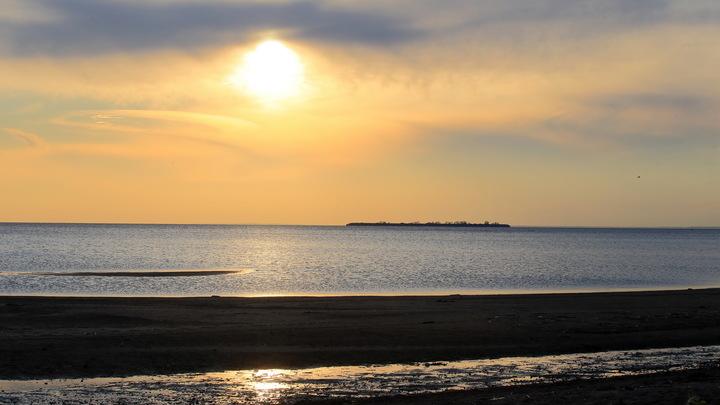 Смертельная прогулка по Финскому заливу. Пес задохнулся после купания в грязной воде