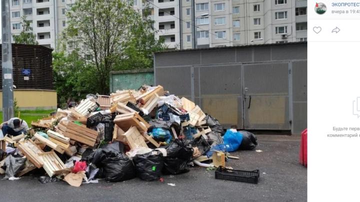 Цветет и пахнет нелегальный бизнес: мигранты завалили мусором двор в Выборгском районе Петербурга