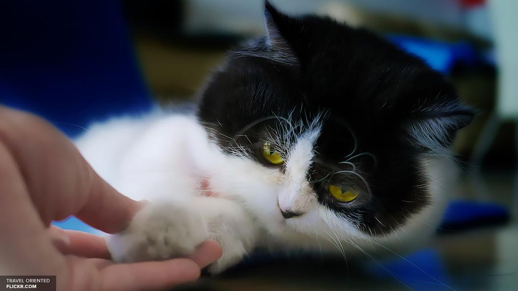 Видео: Кот в прямом эфире украл чай у мэра Риги