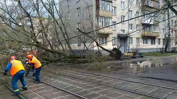 Непогода нарушила работу парков в Москве
