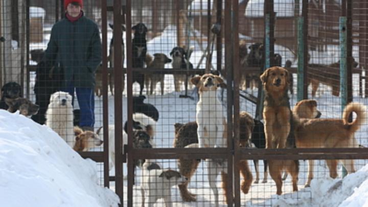 После серии нападения собак челябинцы просят изменить закон об обращении с животными