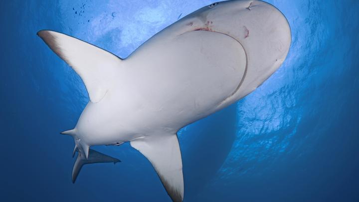 Акула дала сдачи рыбаку: В США морской хищник цапнул за ногу вытащившего его из моря рыболова