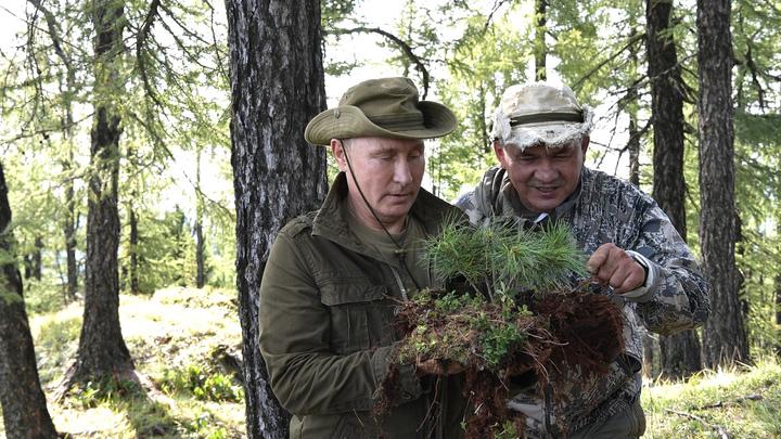 Теперь перспективная: Путин и Шойгу эвакуировали сибирскую сосну