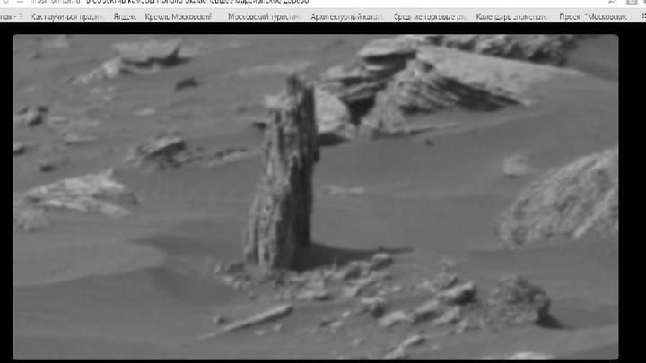 На Марсе разглядели останки древнего дерева