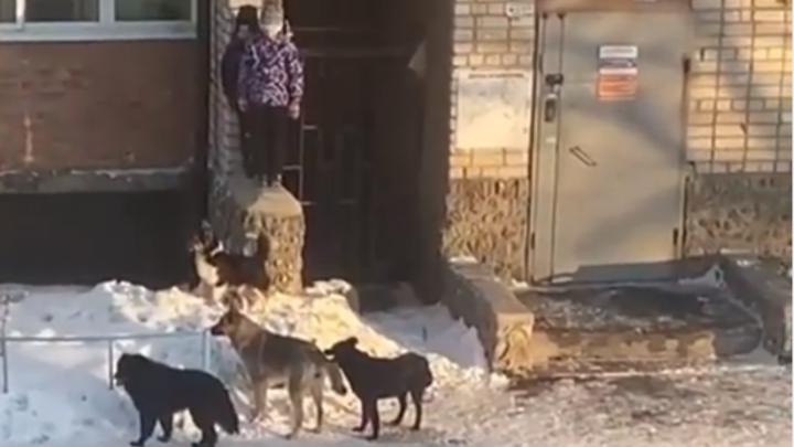 Никто не помог: в Челябинской области стая собак загнала детей на кирпичный забор