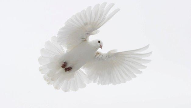 «Прощай, Элфи»: Папа Римский помолился о малыше, обреченном на смерть Британией