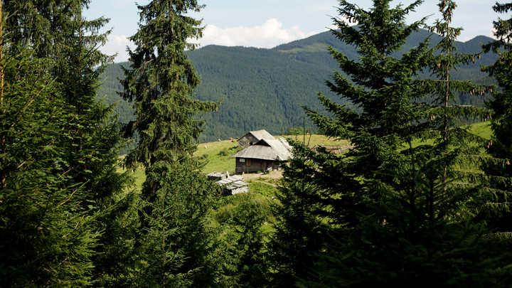 Полный распил: Украина готова уничтожить все леса ради транша ЕС
