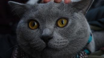 В Калининградской области бездомный кот спас пропавшего 13-летнего мальчика