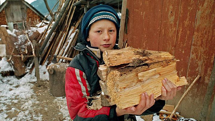 Идите лесом: Необходимые поправки в закон о валежнике