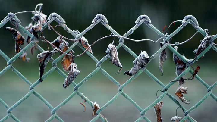 Заморозки до -5 градусов зафиксированы в Новосибирской области в конце весны