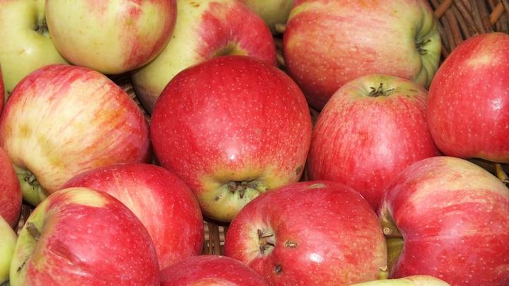 Не выбрасывайте сердцевинки яблок: Из них получатся сразу три полезных продукта